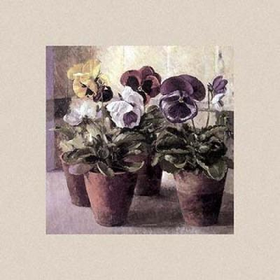 Pansies in Flowerpots