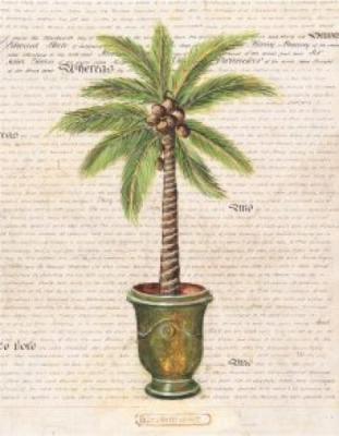 Palm with Pot d'Anduze