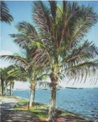 Palm Grove