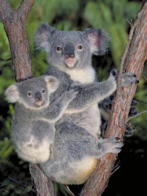 arrived safely Anonymous-Koala-Bears-227394