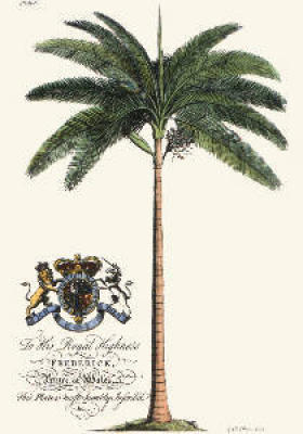 Palm Pl.IV Female Palm Tree (Restrike Etching)