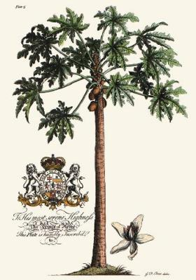 Palm Pl.15 Female Papaya Tree (Restrike Etching)
