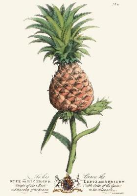 Palm Pl.21 The Pineapple (Restrike Etching)