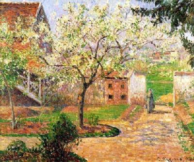 Plum Trees In Flowers At Eragny