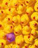 Quack, Quack by Dave Brullmann